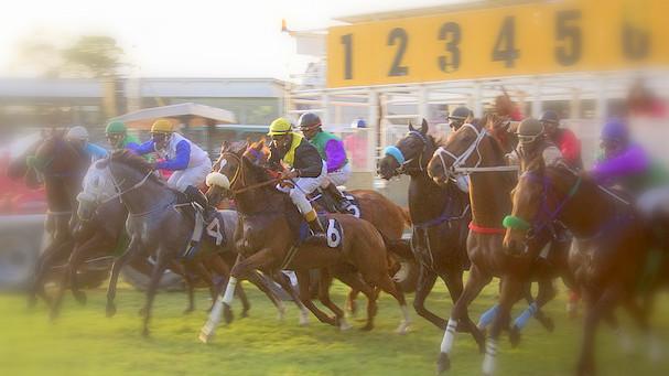 HorseRaceStart